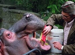 hippo teeth - mendelsohn dental